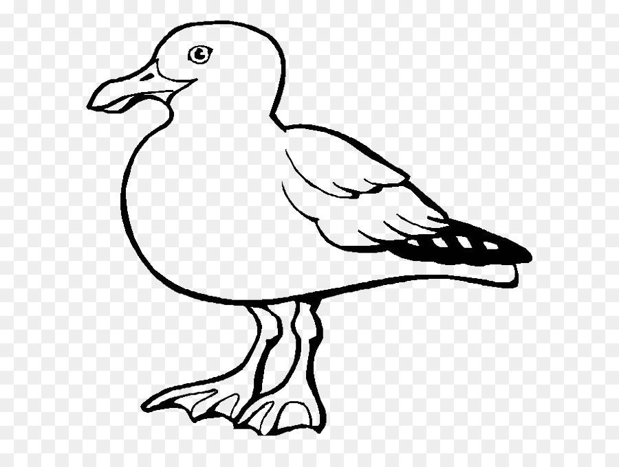 Gaviotas de Aves Europeas Gaviota California gaviota libro para ...