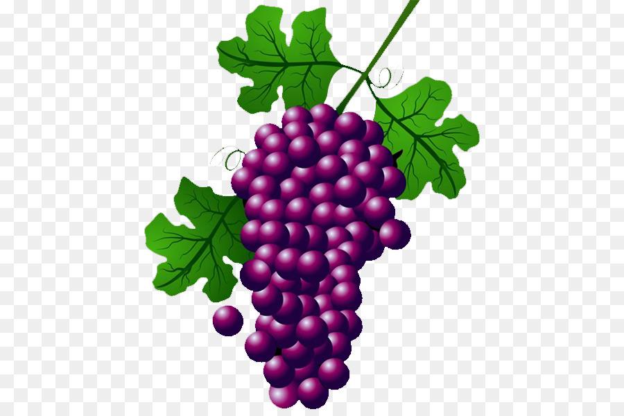 wine common grape vine concord grape clip art grape png download rh kisspng com grapevine clip art borders free grape vine clip art free