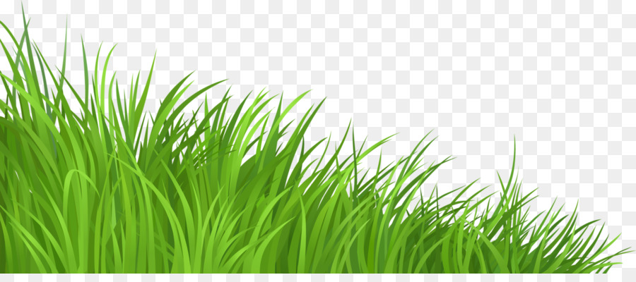 lawn clip art grass png download 1280 552 free transparent rh kisspng com clip art grass and flowers clip art grasshopper