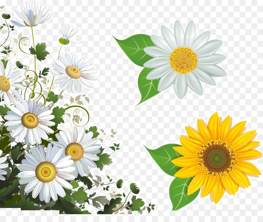 Común Flor de la margarita del marco de la Imagen de la fotografía ...