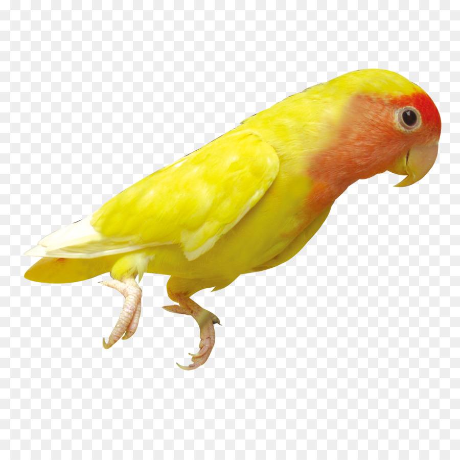Bird Parrot png download - 2200*2200 - Free Transparent