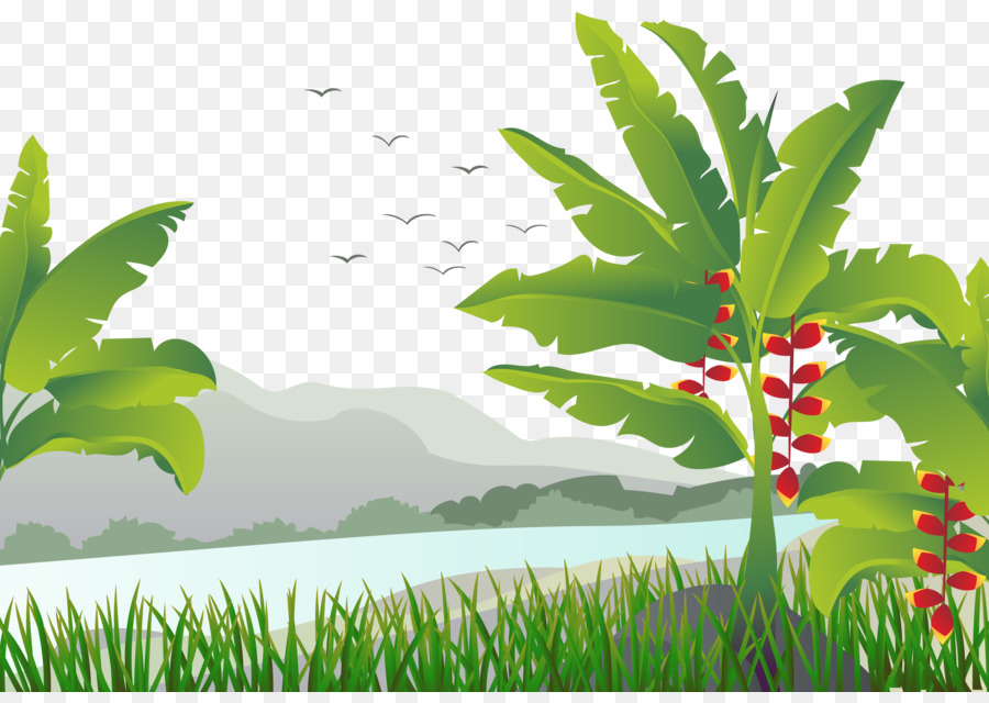 Banana Leaf Baum Illustration Tropischer Mango Baum Png