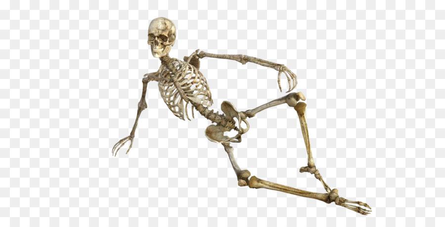 Bone Human Skeleton Osteoporosis Human Body Skeleton Frame Model