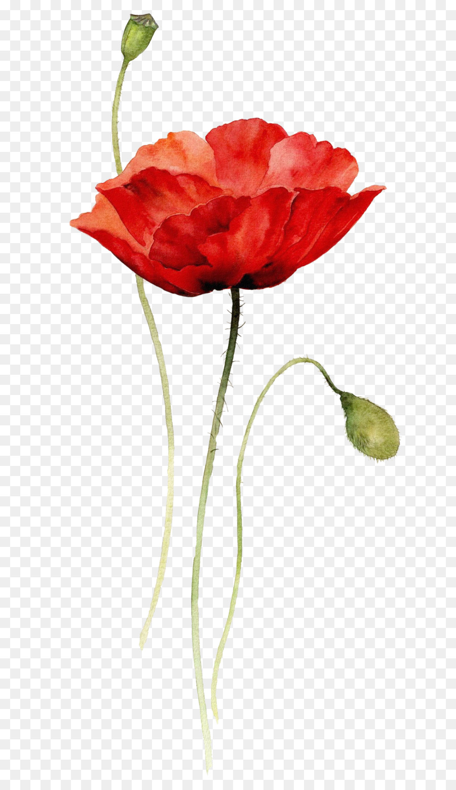Poppies Watercolor Painting Paper Drawing Creative Abstract