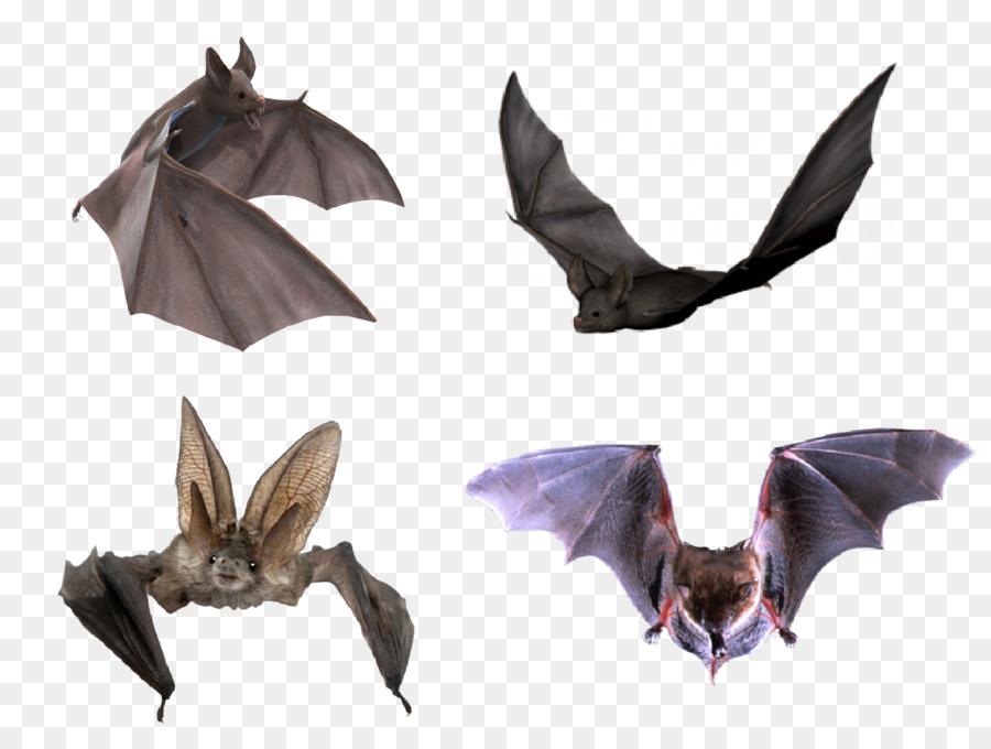 Flight Microbat Halloween Halloween Bats Png Download