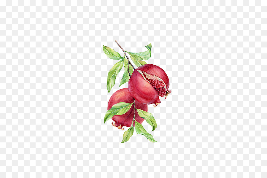 Nar Boyama Dalları Nar Png Indir 600600 Serbest şeffaf Bitki