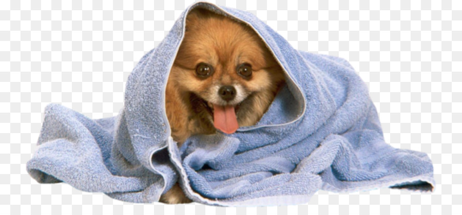 Pomeranian Poodle Puppy Towel Dog Grooming Towel Dog Png Download
