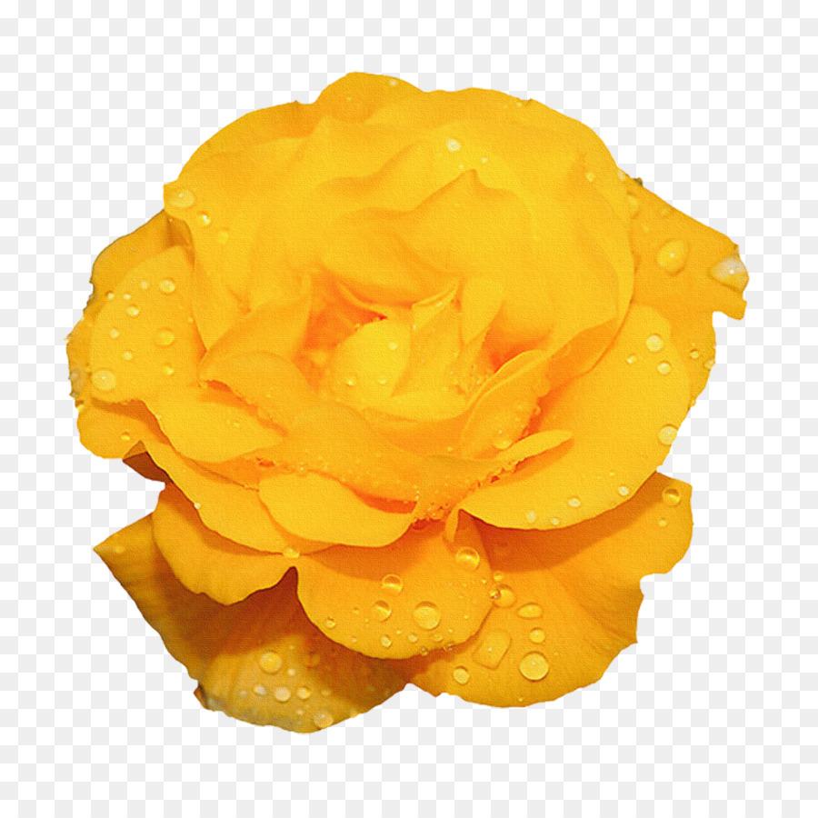 Fiori Gialli Png.Rosa Fiore Giallo Di Animazione Bellissimo Astratto Fiori