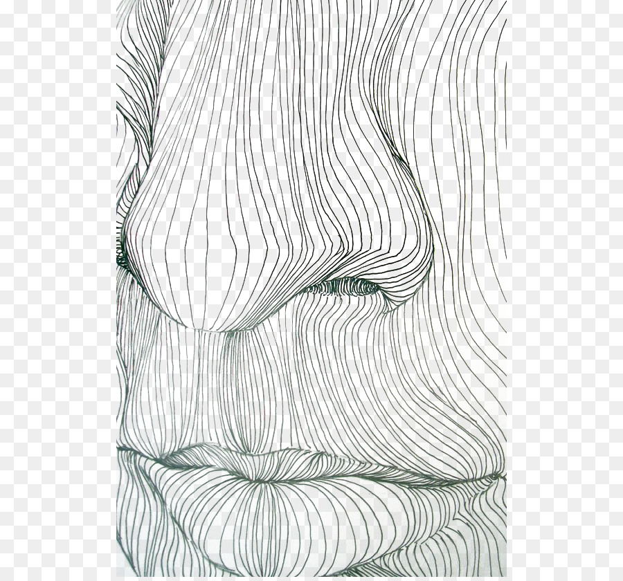 contour drawing line art contour line nose and mouth lines png