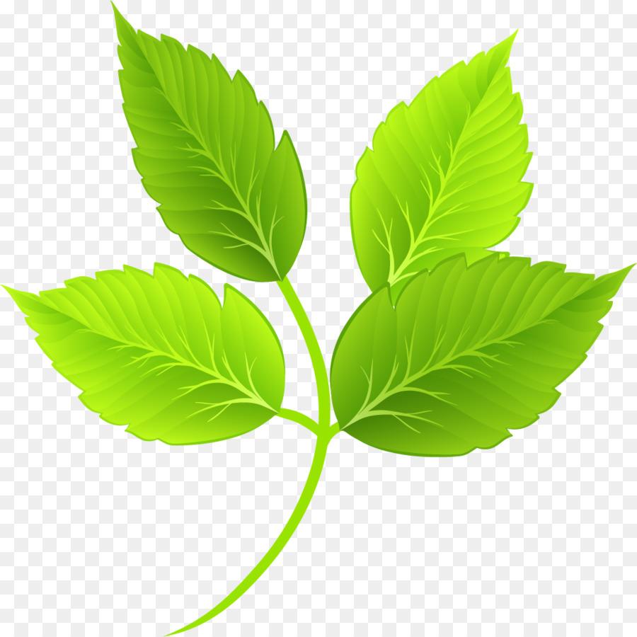 Leaf Green Cartoon - Cartoon green leaves png download - 1001*1001 ...