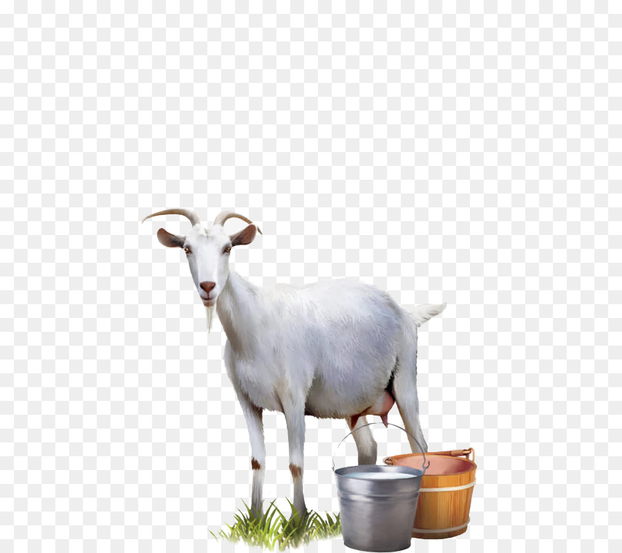 Goat milk Cattle Sheep - goat png download - 800*800 - Free ...