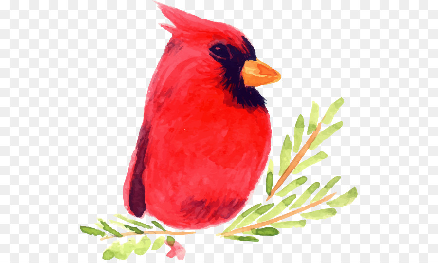bird watercolor painting illustration hand painted christmas cartoon red bird