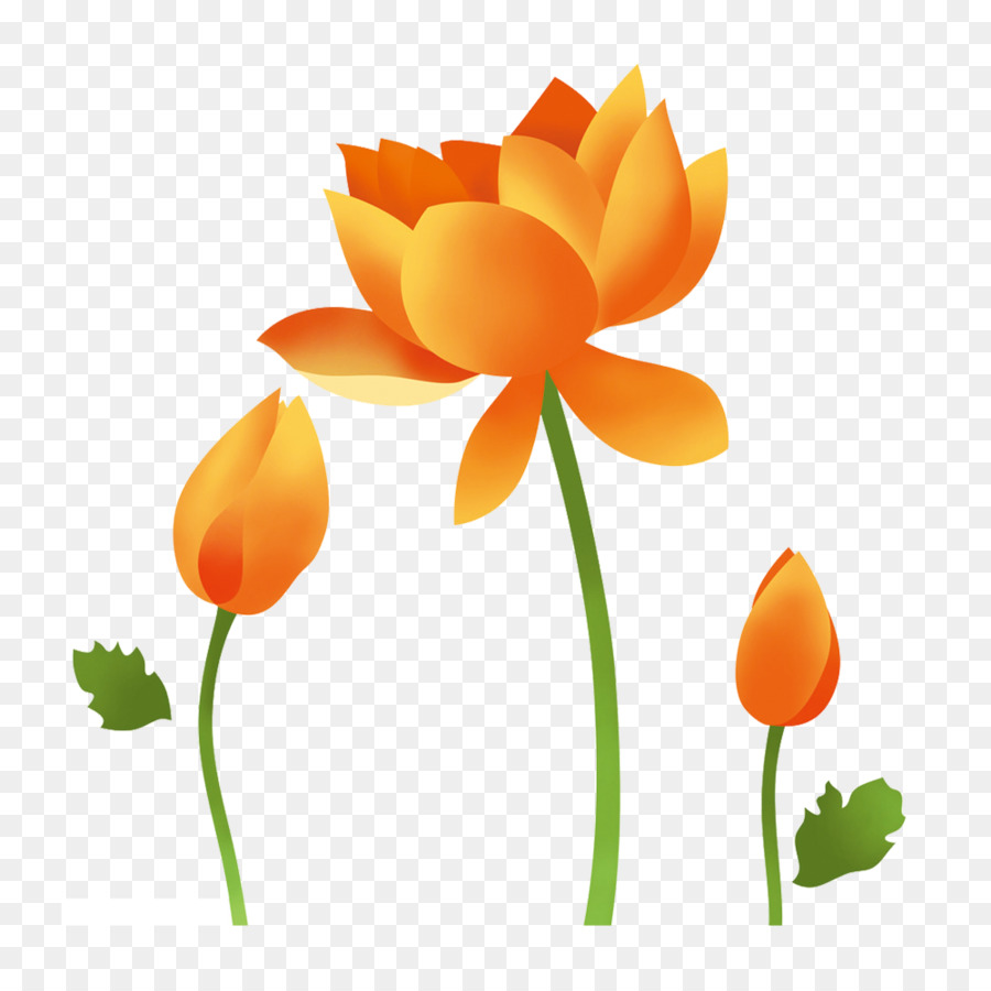 Nelumbo Nucifera Yellow Lotus Fig Png Download 10001000 Free