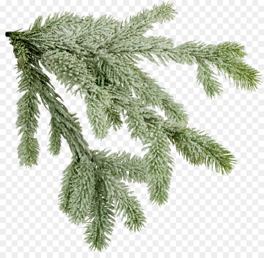 norway spruce tree fir branch christmas tree branches picture - Christmas Tree Branch Decorations