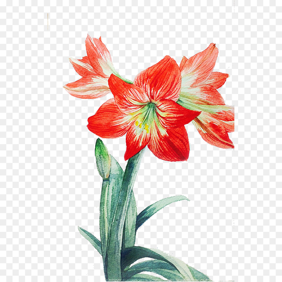 Lilium red flower red lily png download 596898 free lilium red flower red lily izmirmasajfo