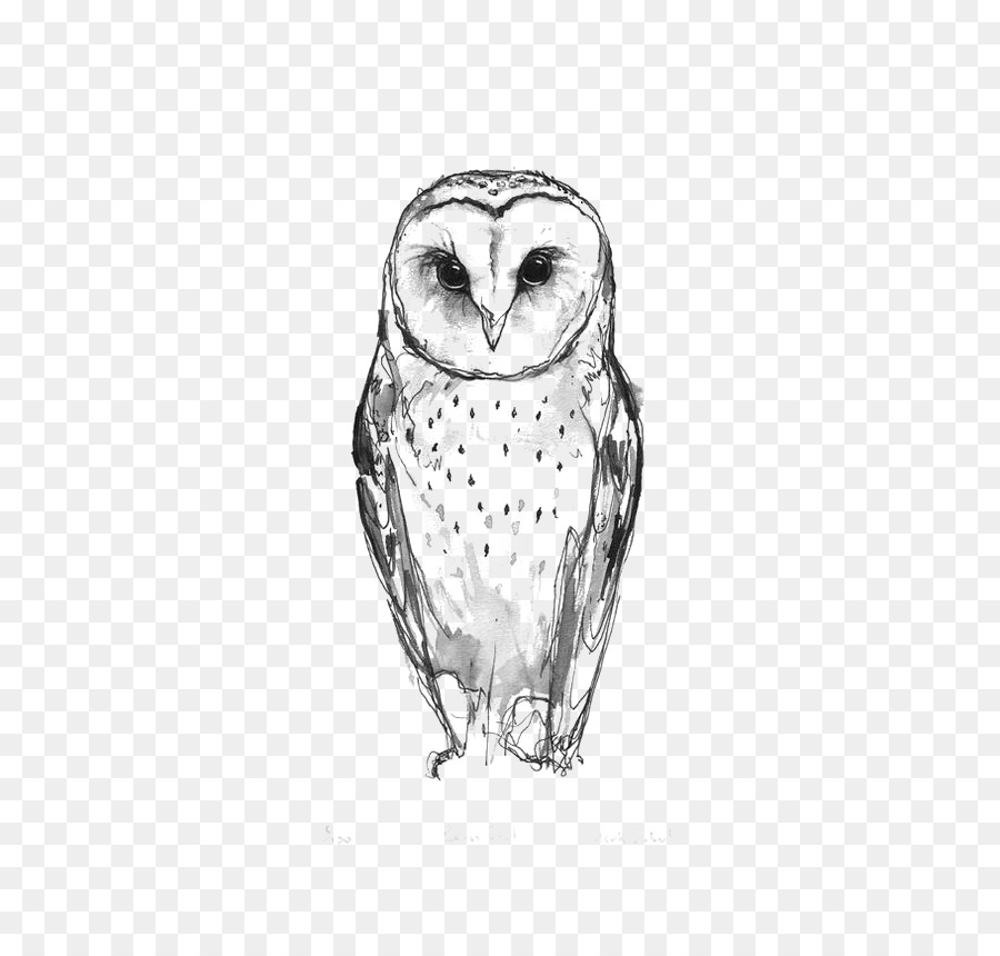 Barn owl tattoo idea drawing owl 564 846 transprent png for Owl beak drawing