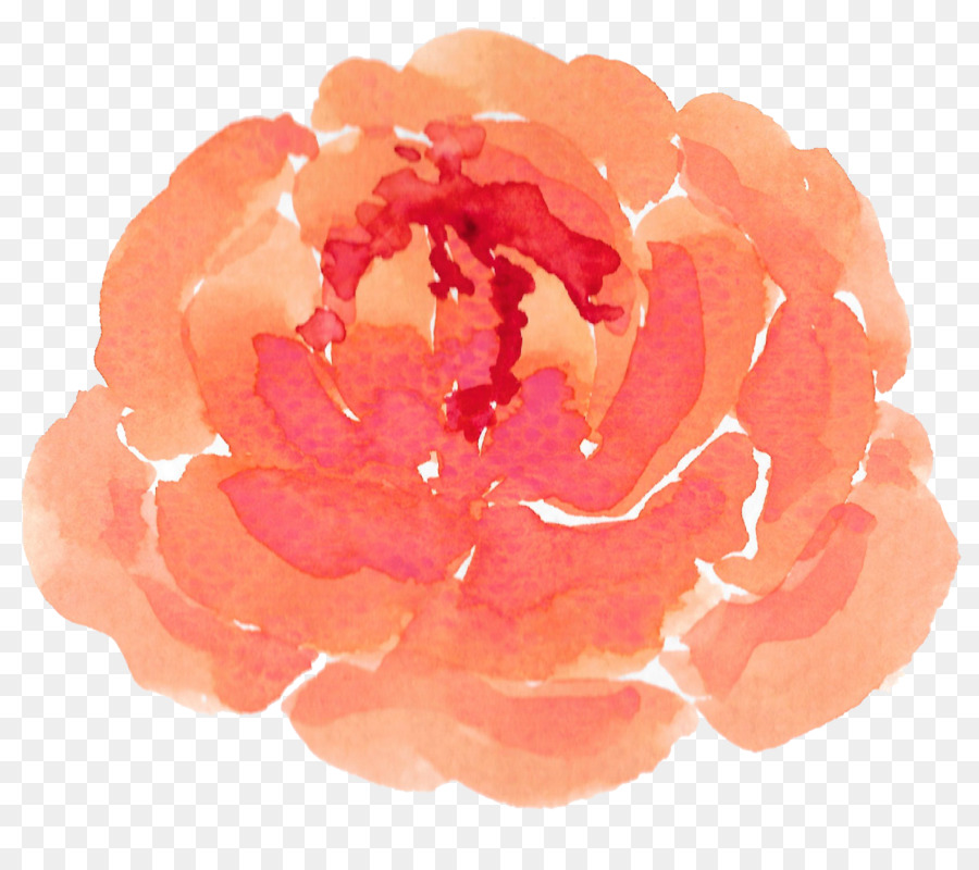 Garden roses watercolor flowers orange flowers png download garden roses watercolor flowers orange flowers mightylinksfo