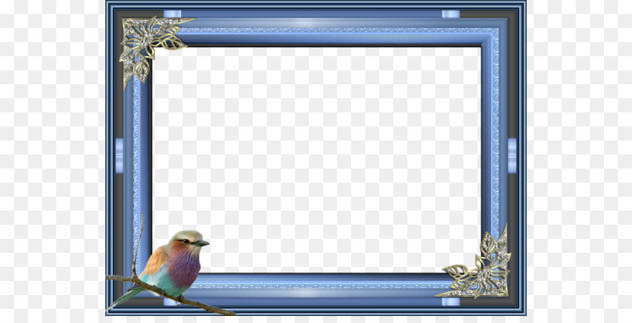 Bird Picture frame Blue Photography - Blue bird border png download ...