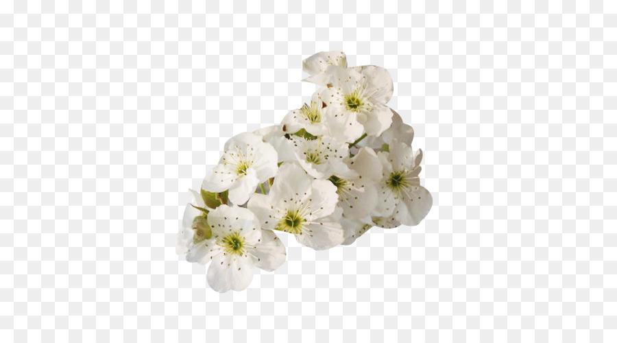 Petal white floral design flower pure white pear flower petal petal white floral design flower pure white pear flower petal picture material mightylinksfo