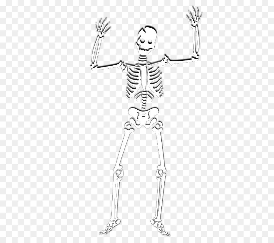 Esqueleto humano Clip art - Bien Formatos De Archivo De Imagen - 640 ...