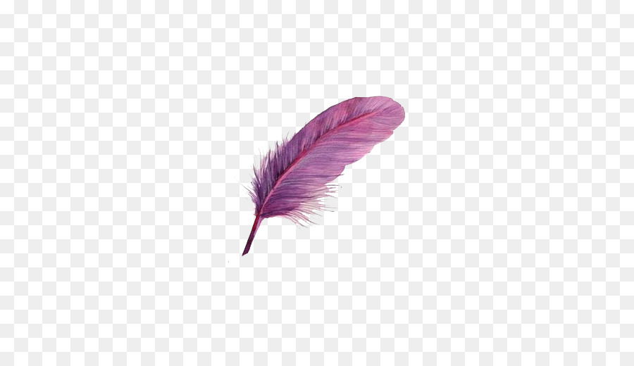 bird feather purple purple bird feathers png download 637 509