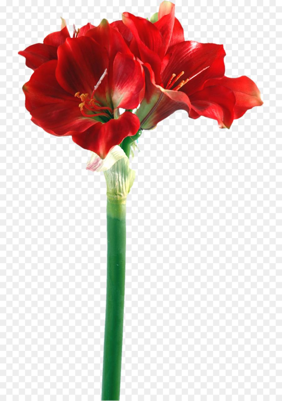 Amaryllis Iris germanica Bulb Flower Lilium - Jewelry design png ...