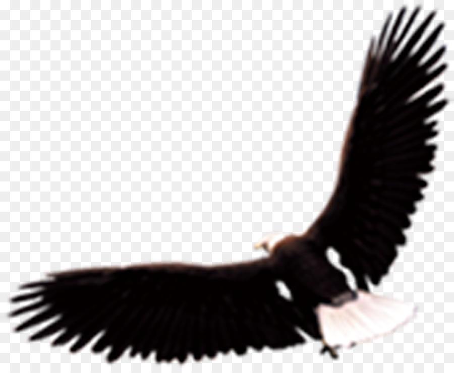 Download 73 Foto Gambar Burung Elang Vektor HD Terbaru Gratis