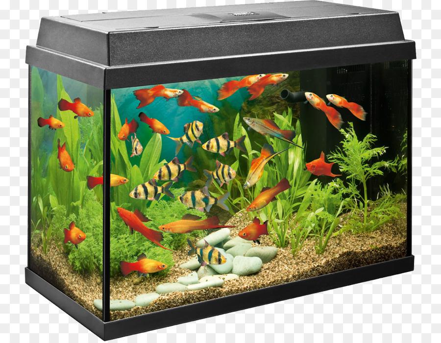 tropical aquariums angelfish filter fishkeeping fashion creative