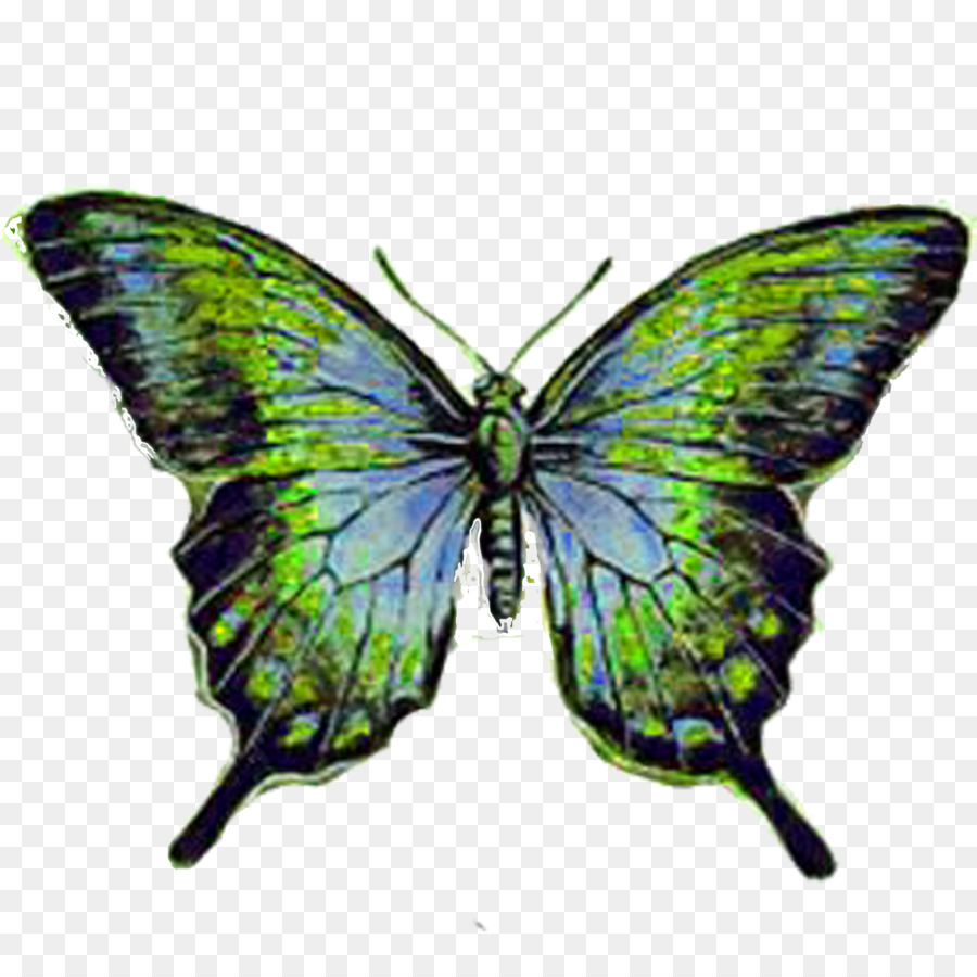 Butterfly Paper Insect Coloring book Drawing - Butterfly png ...