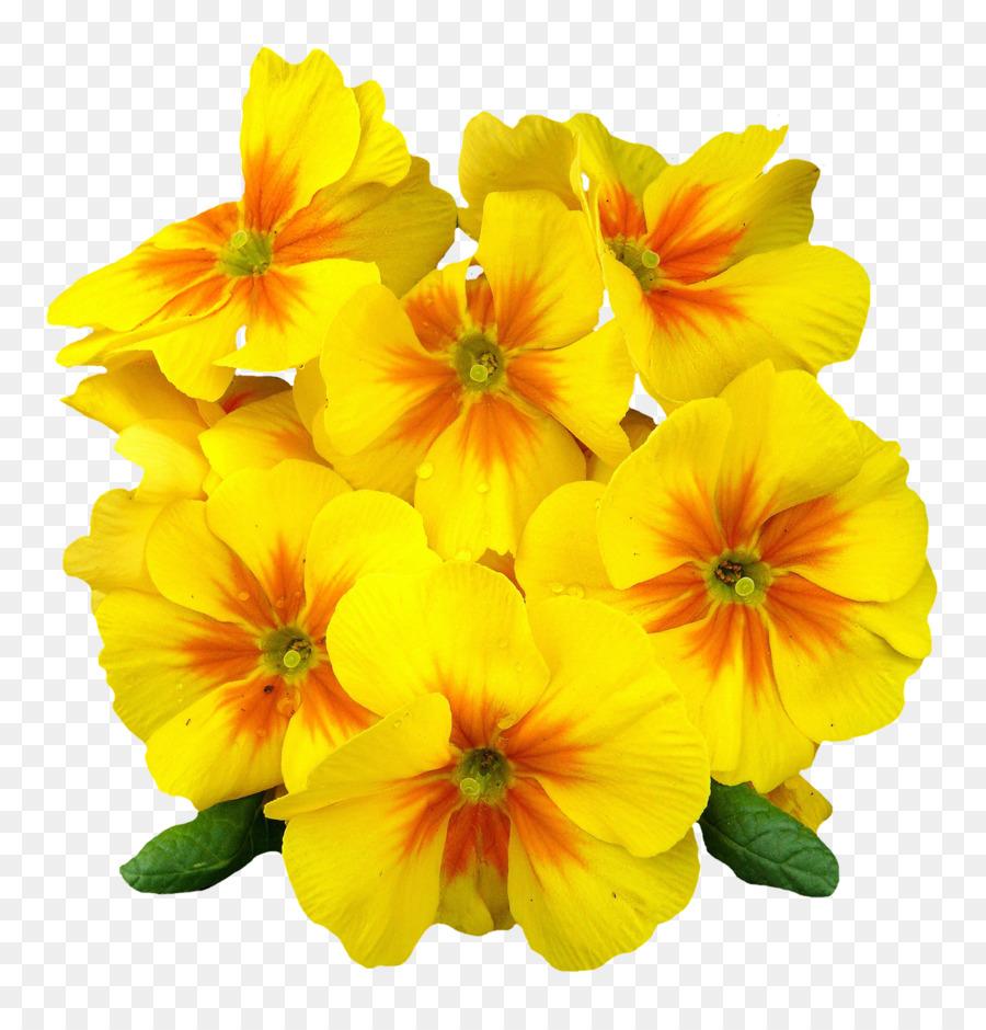 Flower Petal Clip Art Primrose Flower Png Download 13001344