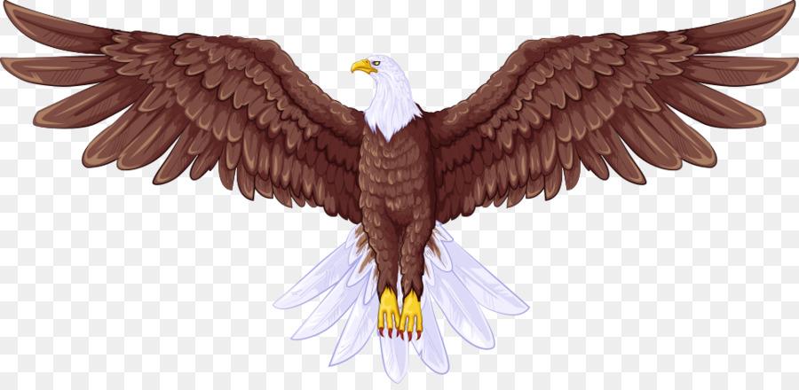 bald eagle drawing illustration vector birds png download 965