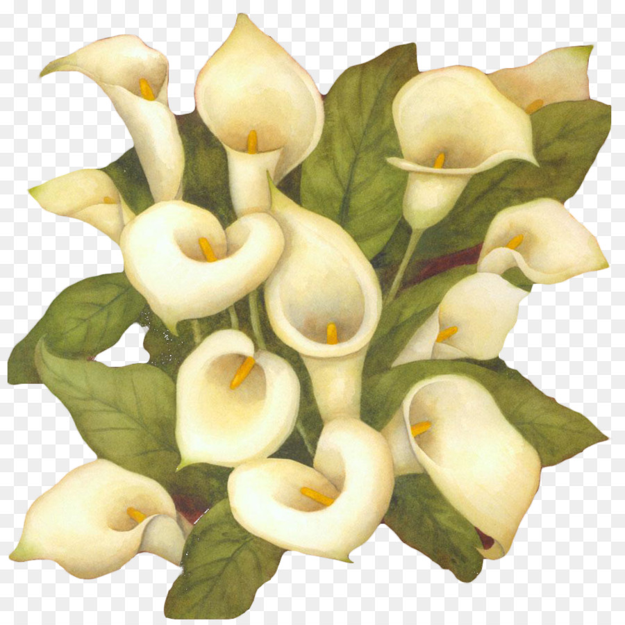 The art of painting flower arum lily white calla flower bouquet the art of painting flower arum lily white calla flower bouquet izmirmasajfo