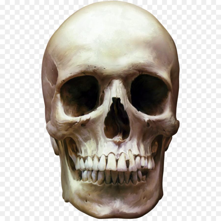 Human Skull Skeleton Clip Art Skeleton Head Png Download 567894