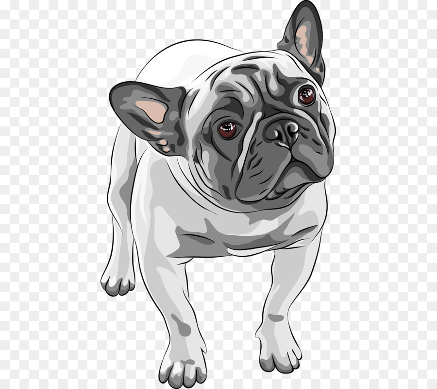 French Bulldog American Bulldog Puppy Hand Painted Puppy Png
