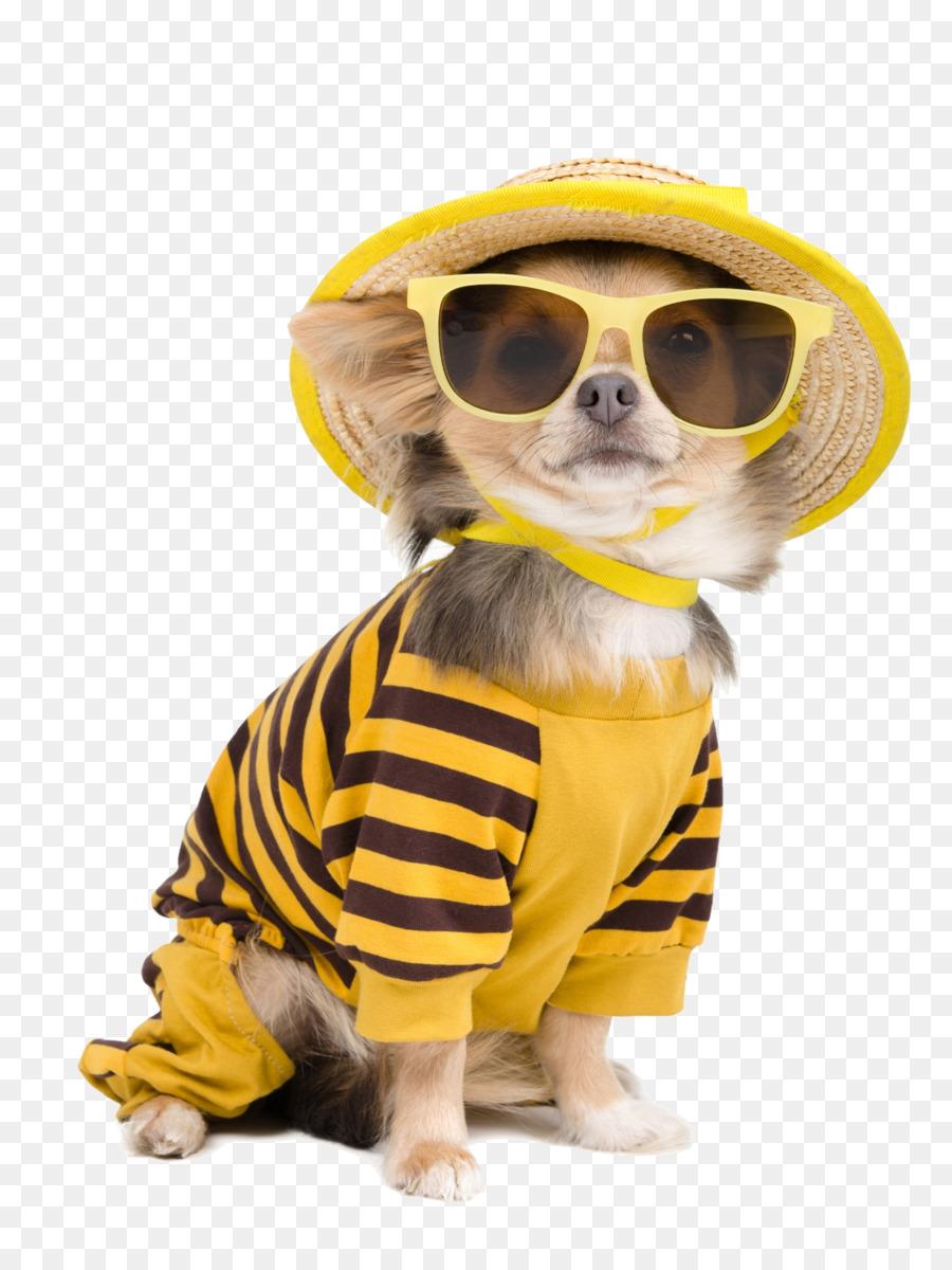 00d4a4f9389de Chihuahua T-shirt Roupas de Cachorro de Estimação - Teddy bonito cão ...