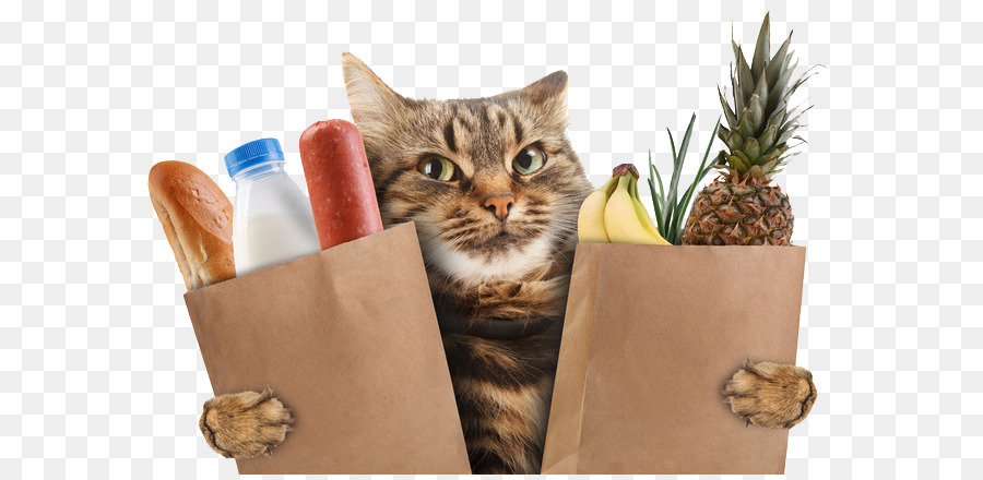 Cat In A Bread Box Unique Scottish Straight Kitten Wildcat Stock Photography Supermarket He