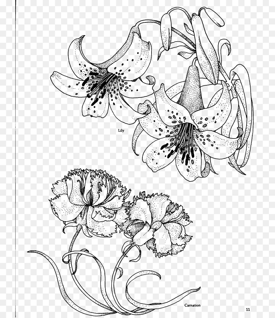 Carnation Birth Flower Drawing Coloring Book