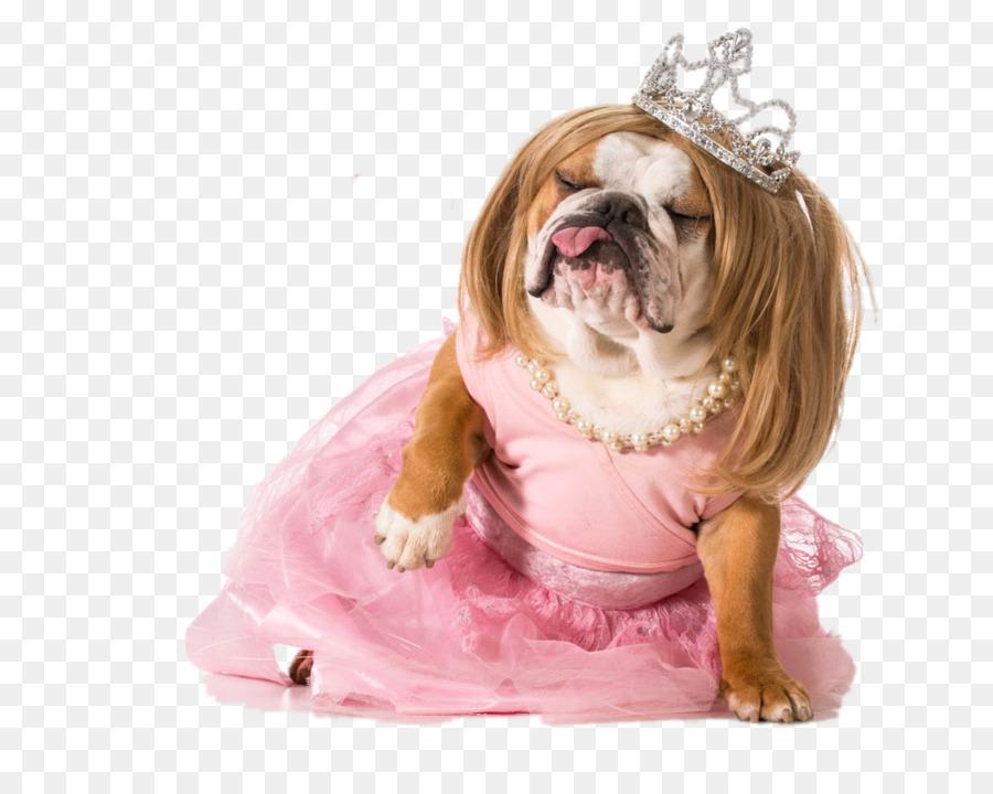 Cachorro Bulldog fotografía de Stock de Disfraces libre de Regalías ...