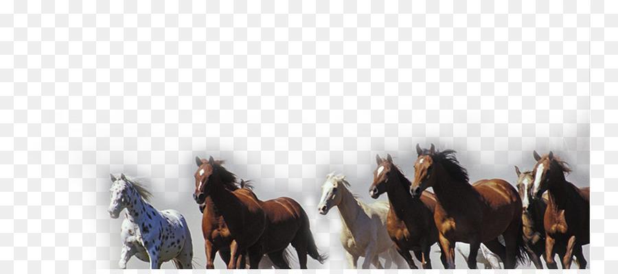 Caballo Pony Televisión De Alta Definición Resolución De Pantalla