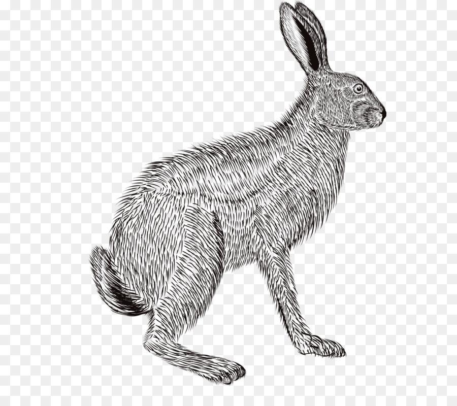 Domestic Rabbit European Rabbit Hare Pencil Sketch Pencil Drawing