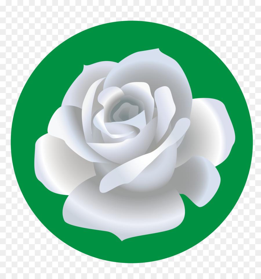 as rosas do jardim de praia de rosa desenho de flor rosa branca