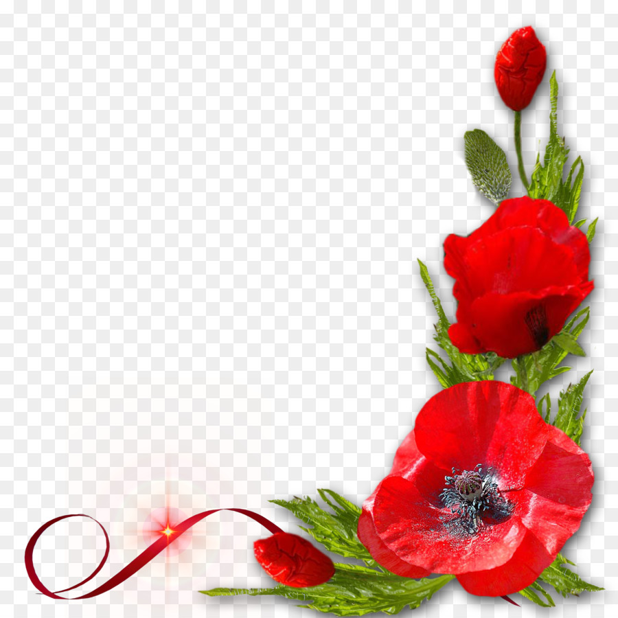Poppy Red Flower Red Floral Decoration Pattern Png Download 3500