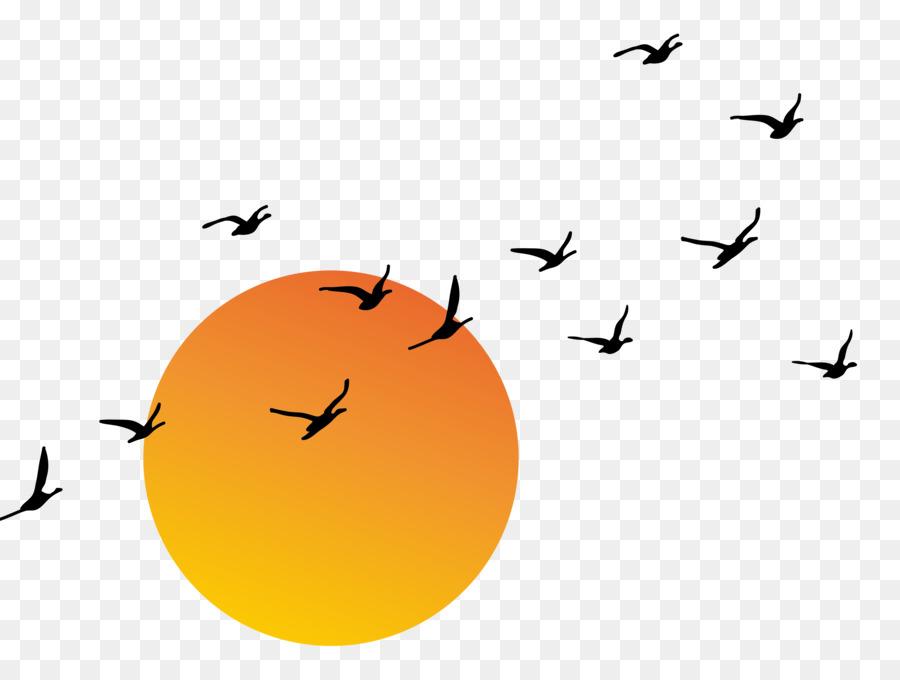 sunset euclidean vector vector sunset png download