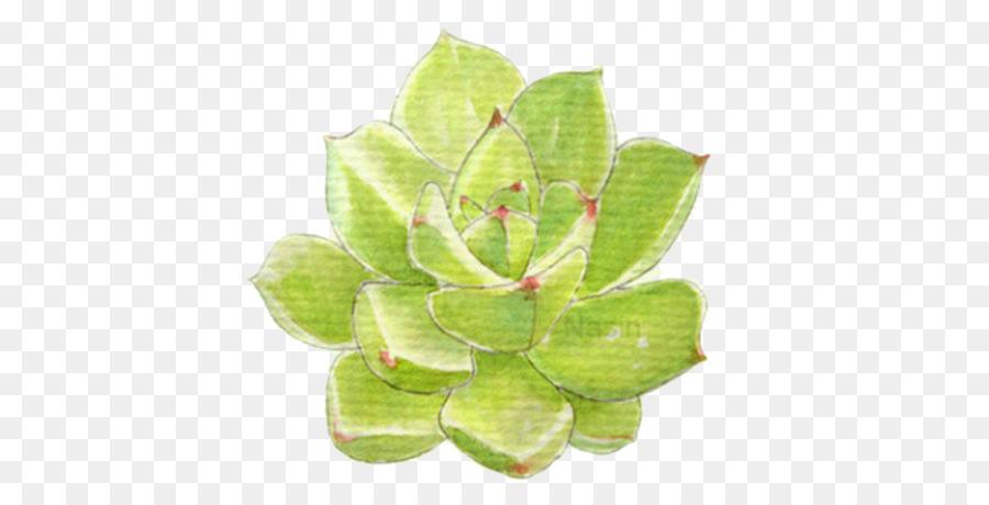 Pianta Succulenta Foglia Disegno Piante Grasse Scaricare Png