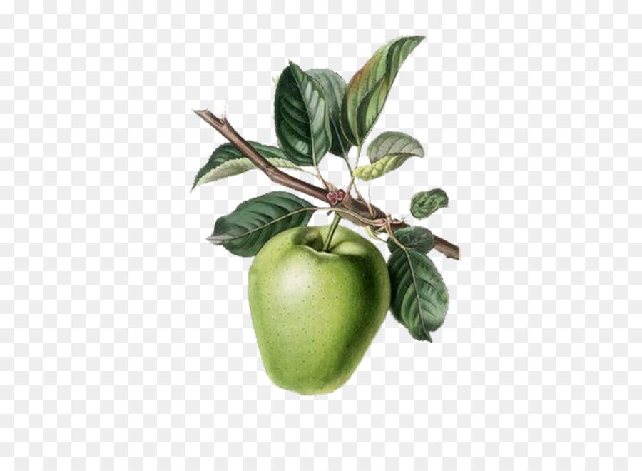Elma Meyve Ağacı Boyama Anaç Berry Sopa Ile Boyalı Yeşil Elma