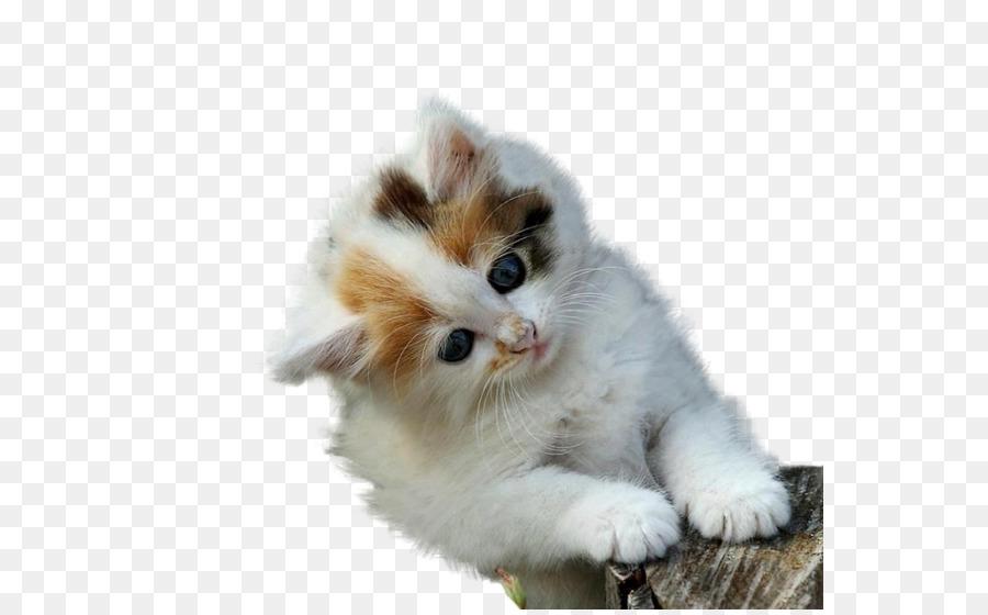 Download 99+  Gambar Kartun Kucing Persia Paling Keren Gratis