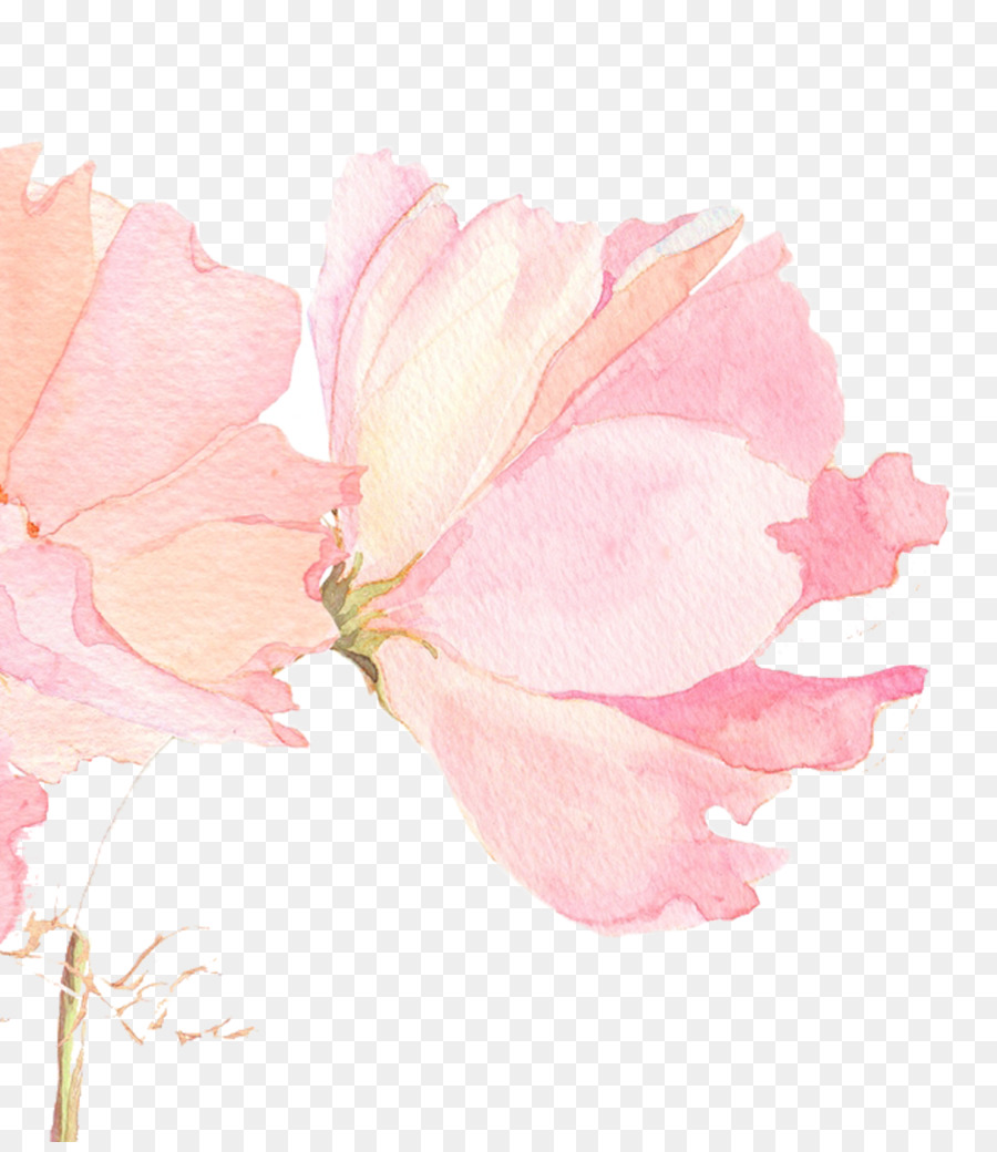 Top Wallpaper Harry Potter Watercolor - kisspng-watercolour-flowers-watercolor-painting-wallpaper-beautiful-cherry-picture-material-5aa30fd234e355  Picture_92773.jpg