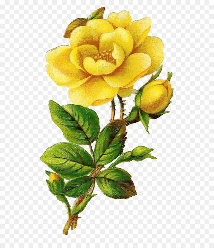 Rose Yellow Flower Clip Art Creative Valentines Day Png Download
