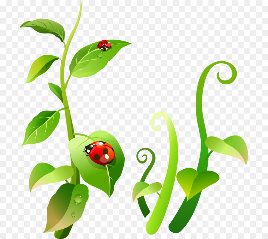 Ladybird insect clip art cartoon floral motifs png download 767 ladybird insect clip art cartoon floral motifs ccuart Images