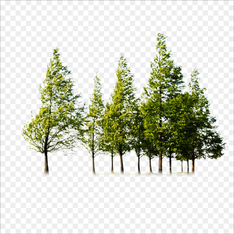 Tree Trees Png Download 1773 1773 Free Transparent